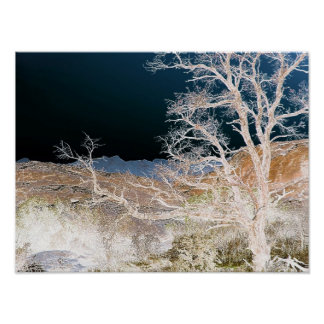 Tree In Winter Poster