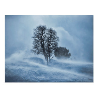 Tree in winter storm postcard
