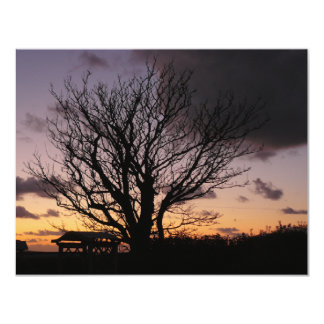 Tree in Winter Sunset Card