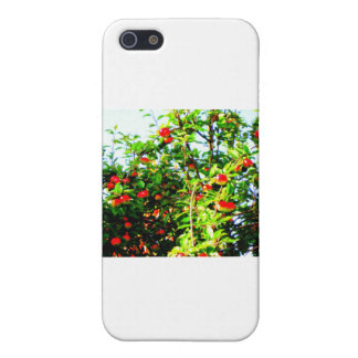 tree iPhone SE/5/5s cover