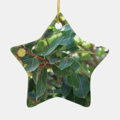Tree, Italy Double-Sided Star Ceramic Christmas Ornament