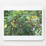 Tree, Italy Mouse Pad