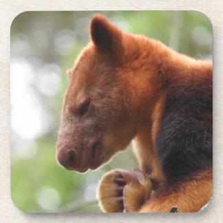 Tree Kangaroo Coasters