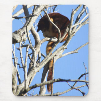 Tree Kangaroo Mousepad