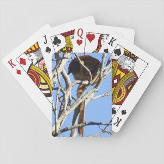 Tree Kangaroo Playing Cards