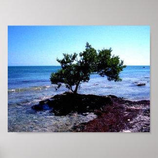 Tree - Key West, Florida Poster