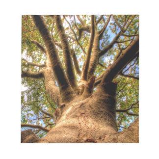Tree King Of Beech Notepad