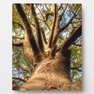 Tree King Of Beech Photo Plaques
