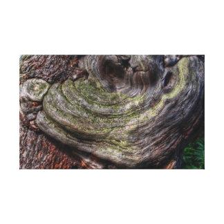 Tree Knot Canvas Print