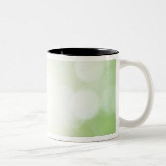Tree Leaves Two-Tone Coffee Mug