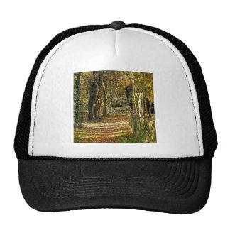 Tree Light Of Autumn Trucker Hat