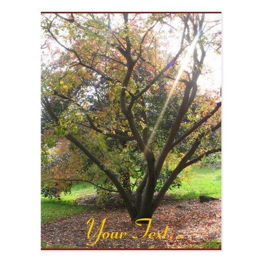 Tree Light Ray Autumn Postcard
