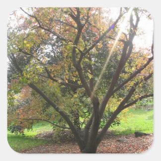 Tree Light Ray Sticker