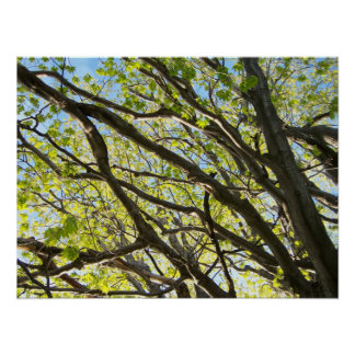 Tree Limbs Poster