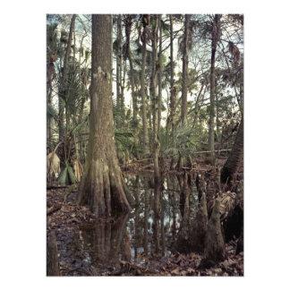 Tree Line. Triple N Ranch, Osceola Co., Fl. Photograph