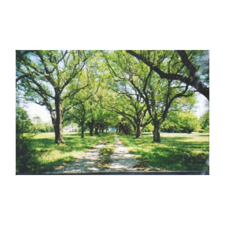 Tree Lined Lane Stretched Canvas Print