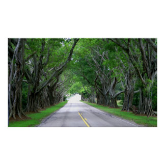 Tree Lined Road Poster