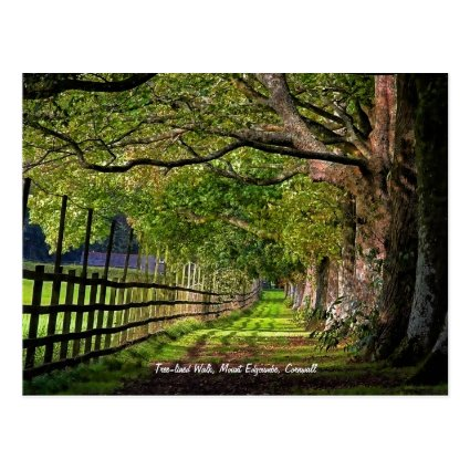 Tree-lined Walk, Mount Edgcumbe, Cornwall Postcard