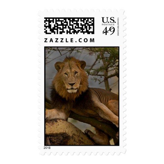 Tree Lion Stamp