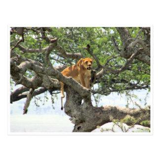 tree lioness postcard