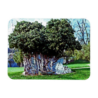 Tree Merged with Stone - Mortemer Abbey - France Rectangular Photo Magnet