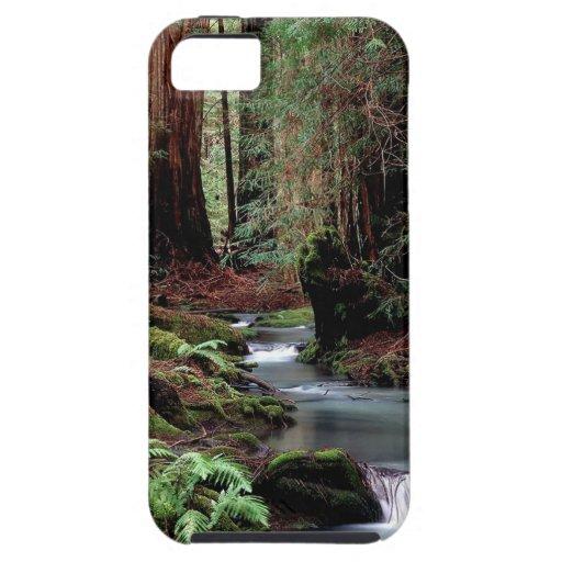 Tree Montgomery Woods California iPhone 5 Cases