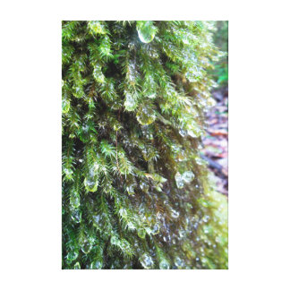 Tree Moss with Dew Droplets Canvas Print
