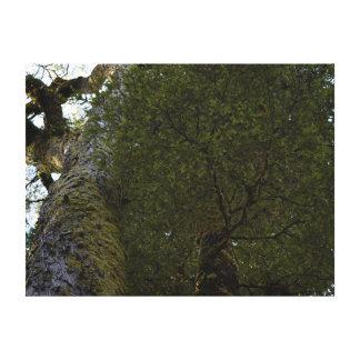 TREE NATIONAL PARK  TASMNANIA AUSTRALIA CANVAS PRINT