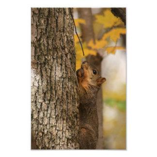 Tree Nuts Photographic Print