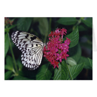Tree Nymph Butterfly Card