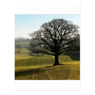 Tree Oaks Enormous Postcard