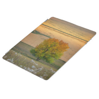 Tree of Fall Colors iPad Cover