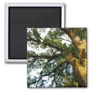 Tree of Life 2 Inch Square Magnet