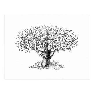 Tree of Life - animals Postcard