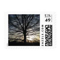 Tree of Life at Sunset Postage