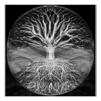 Tree of life black and white serenity poster