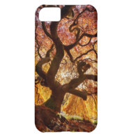 tree of life cover for iPhone 5C