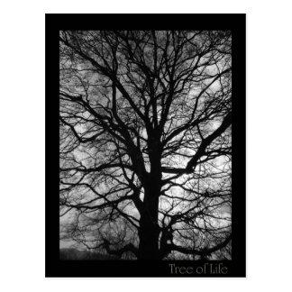 Tree of Life - Lebensbaum - Baum des Lebens Postcard