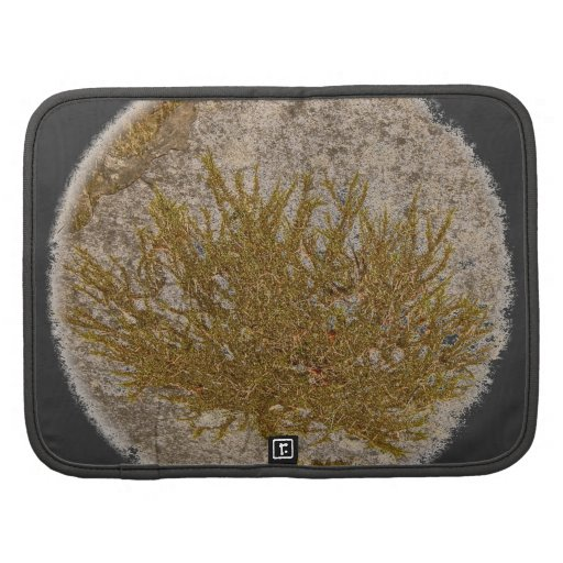 TREE OF LIFE, MOSS ON A ROCK FOLIO PLANNERS