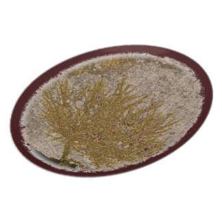 TREE OF LIFE, MOSS ON A ROCK MELAMINE PLATE