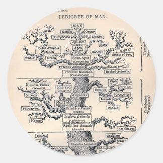 Tree Of Life / Pedigree Of Man Classic Round Sticker