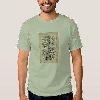 Tree Of Life / Pedigree Of Man T-Shirt