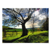Tree of Life Photograph
