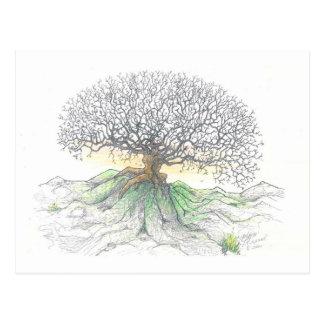 Tree of Life Postcard