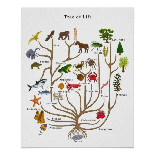 Tree of Life Poster | Zazzle