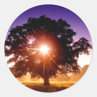 Tree Of Life Round Sticker