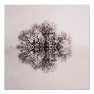 Tree of Reflection 2 Art Poster Print
