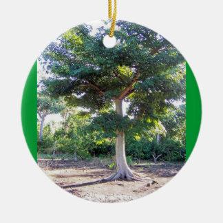 Tree of Wisdom-circle ornament