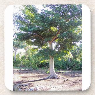 Tree of Wisdom-cork coaster