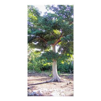 Tree of Wisdom-photo card